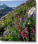 Mountain Meadow Metal Print by Cole Black