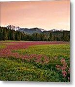 Mountain Meadow Color Metal Print