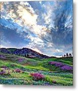 Mountain Meadow Of Flowers Metal Print