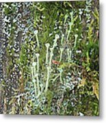 Mountain Moss Lichens And Fungi Metal Print