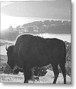 Mountain Wildlife Metal Print