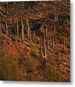 Mountainside Of Cacti Metal Print