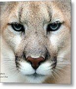 Mountian Lion Metal Print