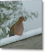 Mourning Dove After The Snowfall Metal Print