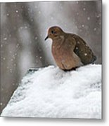 Mourning Dove In Snow Metal Print