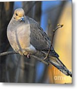 Mourning Dove On Limb Metal Print