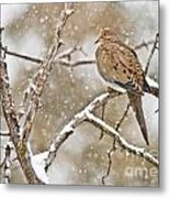 Mourning Dove Pictures 68 Metal Print