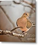 Mourning Dove Pictures 71 Metal Print