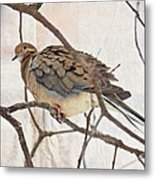 Mourning Dove - Sing No Sad Song For Me #2 Metal Print
