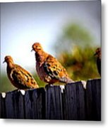 Mourning Doves On Fence Metal Print