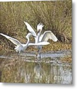 Move It Buster Metal Print