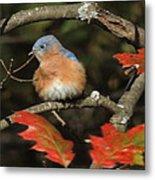 Mr Bluebird Metal Print