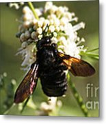 Mr. Bumble Metal Print