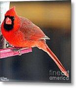 Mr. Cardinal Metal Print