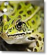 Mr. Froggy Metal Print
