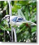 Mr Jay Metal Print