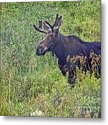 Mr Moose Metal Print