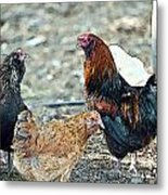 Mr. Rooster Talking With The Chickens Metal Print