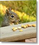 Mr. Squirrel Goes To Lunch Metal Print