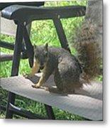 Mr. Squirrel Relaxing Metal Print
