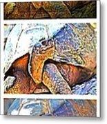 Mr. Tortoise Vertical Triptych Metal Print