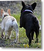 Ms. Quiggly And Buddy French Bulldogs Metal Print