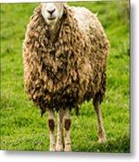 Mt Angel Abbey Sheep - Oregon Metal Print