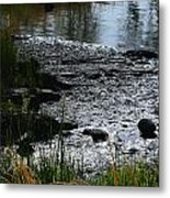 Muck And Beauty Metal Print