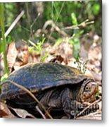 Mud Turtle Metal Print