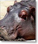 Muddy-faced Hippo Metal Print