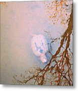Muddy Spring Turtle Metal Print
