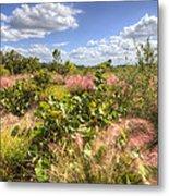Muhly Grass And Sea Grape Plants Along A Florida Coastline Metal Print