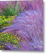 Muhly Grass In The Morning Metal Print