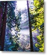 Muir Woods - Fog And Light Metal Print