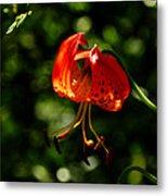 Muir Woods Leopard Lily 001 Metal Print