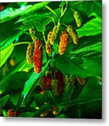 Mulberries - Fruit - Berries Metal Print