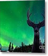 Mule Deer And Aurora Borealis Over Taiga Forest Metal Print