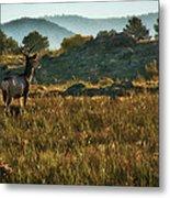 Mule Deer At De Weese Reservoir Metal Print