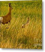 Mule Deer Doe And Fawn-signed-#0365 Metal Print
