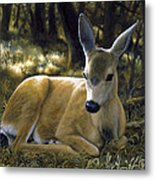 Mule Deer Fawn - A Quiet Place Metal Print by Crista Forest