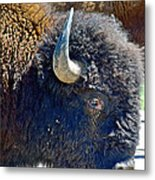 Multi-color-eyed Bison Near Wildlife Loop Road In Custer State Park-south Dakota Metal Print