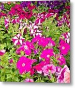 Multi-colored Blooming Petunias Background Metal Print
