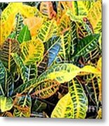 Multi-colored Croton Metal Print