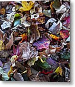 Multicolored Autumn Leaves Metal Print