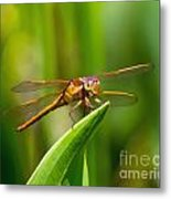 Multicolored Dragonfly Metal Print