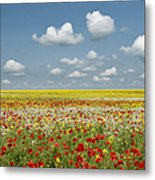 Multicoloured Field Metal Print by Tim Gainey