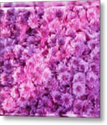 Mums In Purple - Featured In 'comfortable Art' And 'nature Photography' Groups Metal Print
