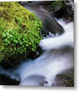 Munson Creek Flows Through The Forest Metal Print