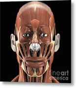 Muscles Of The Face Metal Print