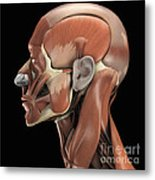 Muscles Of The Head Metal Print